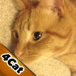 Game4Cats - a Bird Hunting Game for your Cats and Kittens icon
